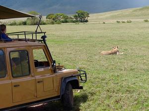 7 Days 6 Nights Join Group Serengeti Wildebeest Migration Fotos