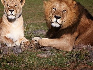 Arusha, Ngorongoro and Manyara Packages Photos