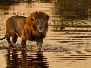 8 Day Botswana Safari Photos