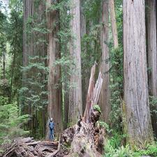 Little Creek Trail