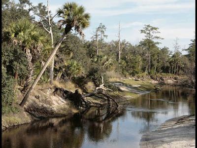 Little Econlockhatchee River Florida