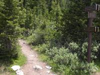Poco Trail Bosque de Oro
