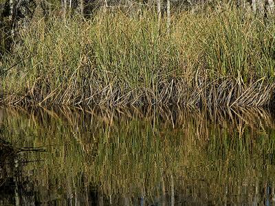 Little River (Ochlockonee River)