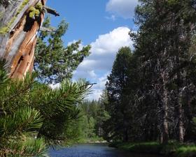 Poco río Truckee