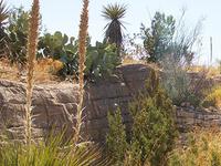 Living Desert State Park Zoo
