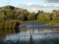 Londres Wetland Centre