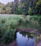 Los Gatos Creek