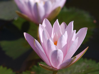 Lotus Museo
