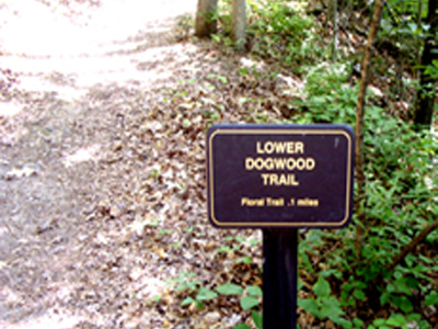 Lower Dogwood Trail