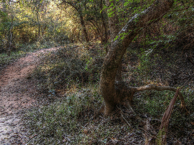 Lucky Strike Trail 144 - Tonto National Forest - Arizona - USA