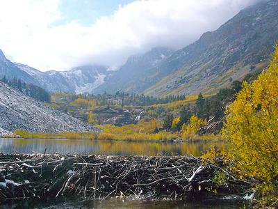 Lundy Beaver Dam