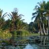 Lagoon Area Townsville Palmetum