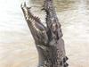 Jumping Crocodile At Adelaide River