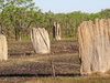 Litchfield National Park Termite Mounds