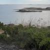 Low Juniper In Archipelago Sea