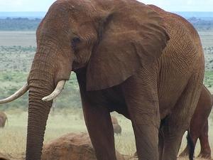 7 Days Kenya Adventure Safari