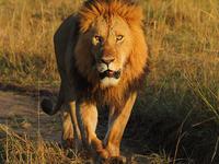 Masai Mara Weeknds Packages