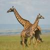 Maasai Mara Adventure 3 días