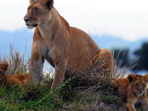 Maasai Mara Trip Fotos