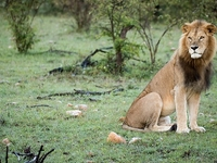 6 Days Masai Mara And Lakes – Nakuru, Bogoria And Baringo