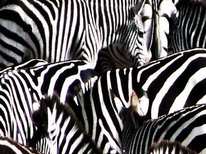 7 Days Safaris Photos