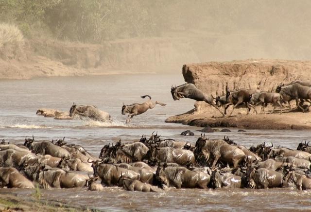 Masai Mara Overnight Safari - 2 Days Photos