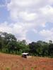 Madathara - Kerala