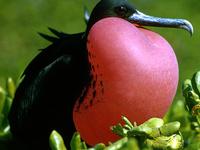 Lo mejor de Galápagos