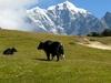 Mahalangur Himal - Nepal
