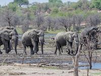 13 Days Elephant Trail - Botswana