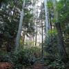 Makomako Hut to Maungapohatu Track