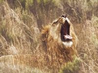 Tsavo Getaway or Masai Mara Deal