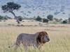 Safari Dreamer 6 Days Wildlife Safari Kenya