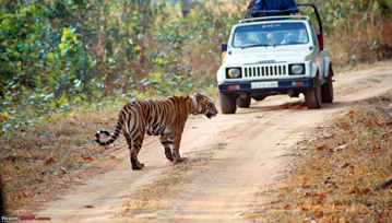 Manas National Park Safaris