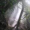 Manawatu Gorge Track