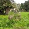 Mangapurua Trig To Johnson's Track - North Island - New Zealand