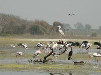 Manjira Santuario de Vida Silvestre
