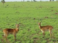 Manovo Gounda-St. Floris Parque Nacional