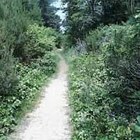 Manuel F. Correllus State Forest