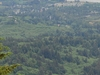 Manzanita Panorama