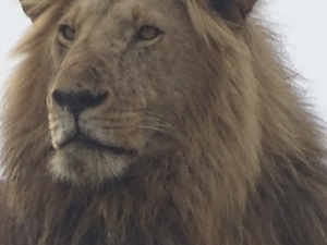 4 Days Masai Mara Safari Fotos