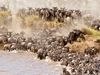 Maasai Mara Holiday Packages