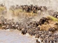 Maasai Mara Holiday Packages