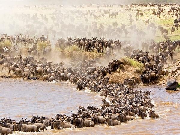 Maasai Mara Holiday Packages Photos