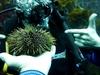 Marine Treasure @ Poor Knights Island NZ