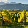 Marlborough Vineyards - New Zealand South Island