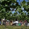 Martinborough Wine-Tasting Tour from Wellington