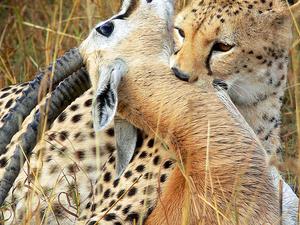 7 Days Masai Mara, Nakuru and Amboseli Package