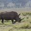 Masai Mara Game Reserve, Rhino