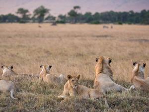6 Day Amboseli, Lake Naivasha And Masai Mara Road Safari Fotos